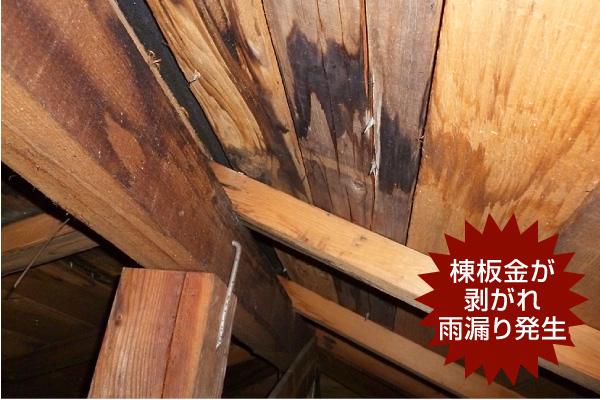 棟板金が剥がれ雨漏り発生