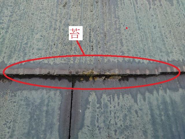 屋根に付いた苔