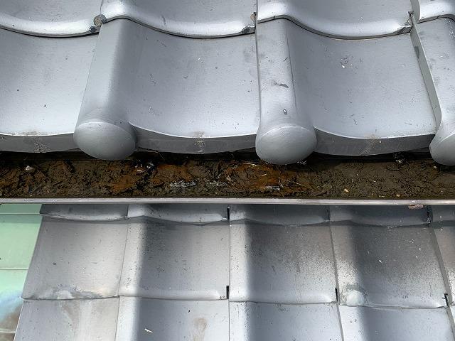 軒樋に溜まったゴミと雨水