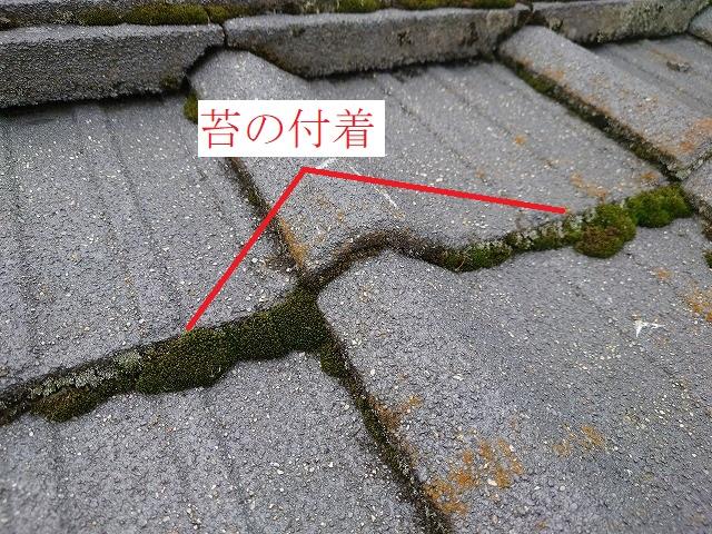 瓦の木口に付いた苔