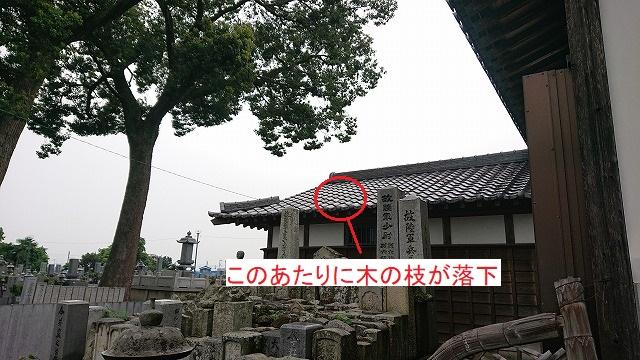 木の枝が瓦屋根に落下