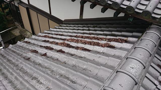 瓦屋根にのった落ち葉