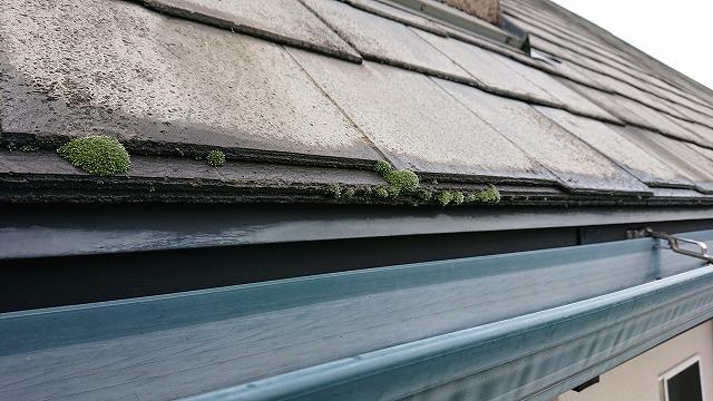 スレート屋根に付いた苔
